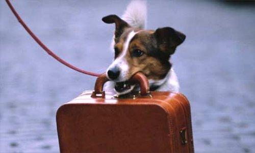 Lemmikkieläin mukana matkalla?
