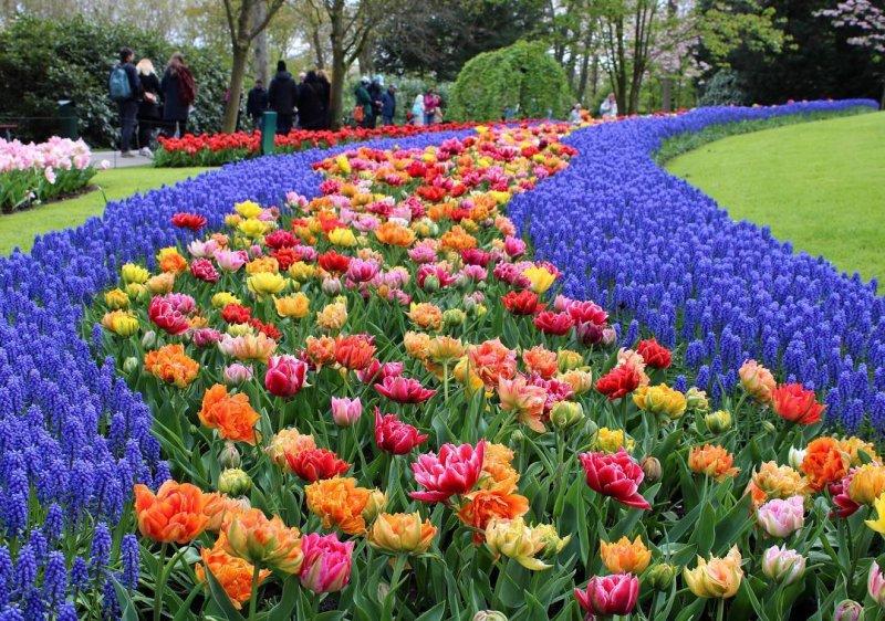 Un mare di fiori e tulipani nel bellissimo parco di Keukenhof