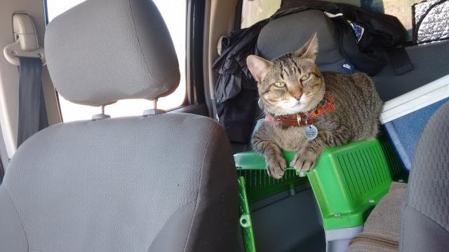 Fredy no carro