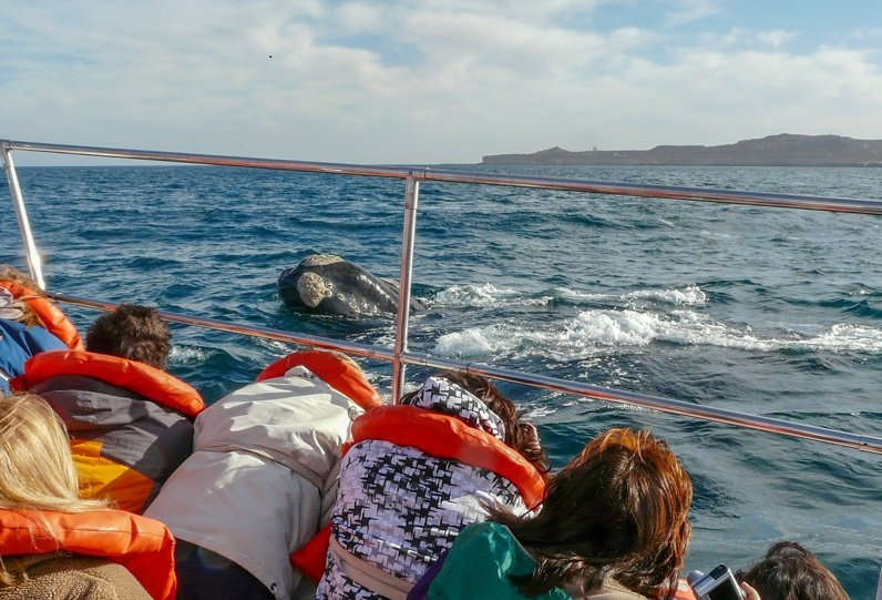 what to do in patagonia: sailing with the whales