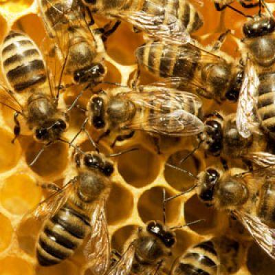 Honey bee business plan pdf