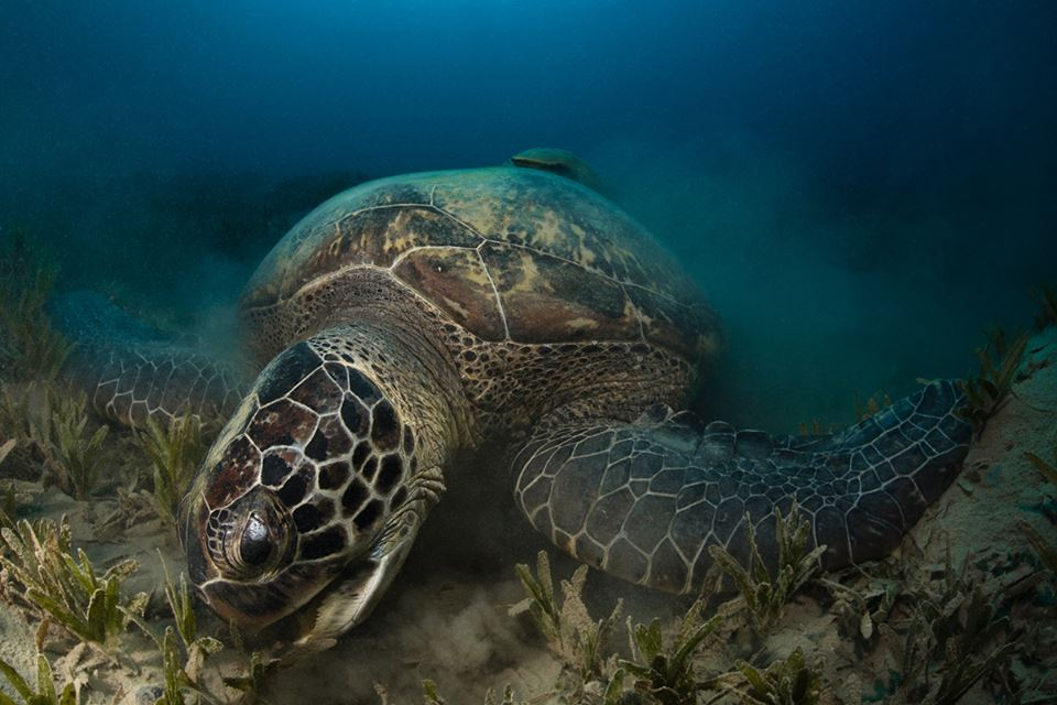 SEA TURTLES RESCUE AND RELEASE