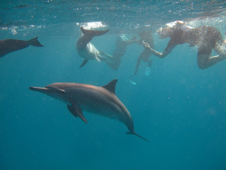 Code of Conduct for Dolphin Encounters