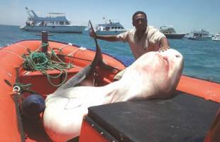 Ban on Shark Fishing