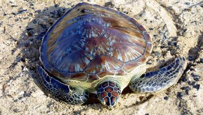 Red Sea Turtle Project