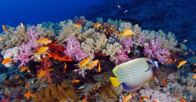 Climate Change and Corals
