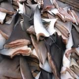 Ban on Shark Fishing