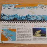 Red Sea Dive Guide