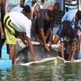 Ban Dolphinariums