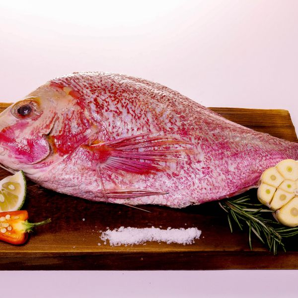 Red Snapper  (Whole)