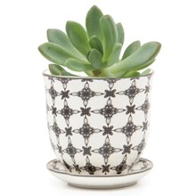 Small Plant Pot Black Stars