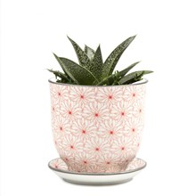 Small Plant Pot Red Flowers