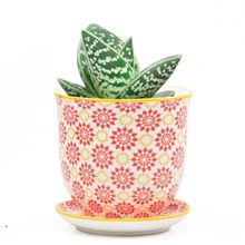 Small Plant Pot Red Stars