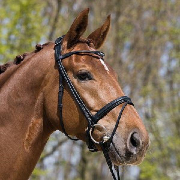 Cabezada inglesa kieffer anja cosida en redondo for Cabezadas para caballos