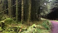 Small hitchhiking from glenariff forest united kingdom to ballymena united kingdom