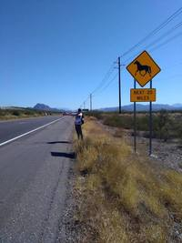 Small hitchhiking from mesa az united states to flagstaff az united states