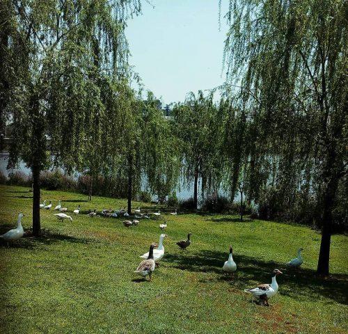 Parque-del-Guadiana-Badajoz-3-crédito-flx_bdjz1