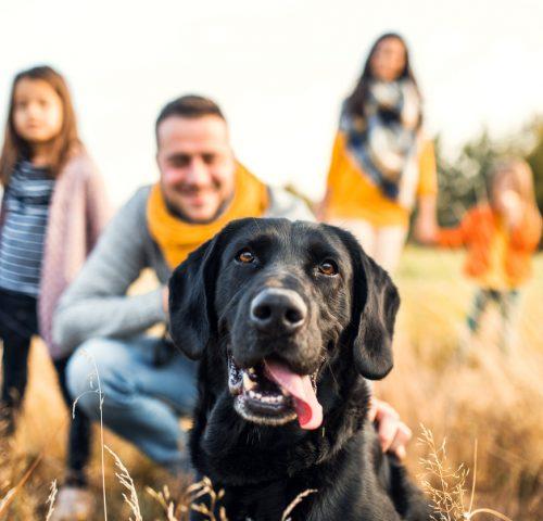 Hund mit Familie