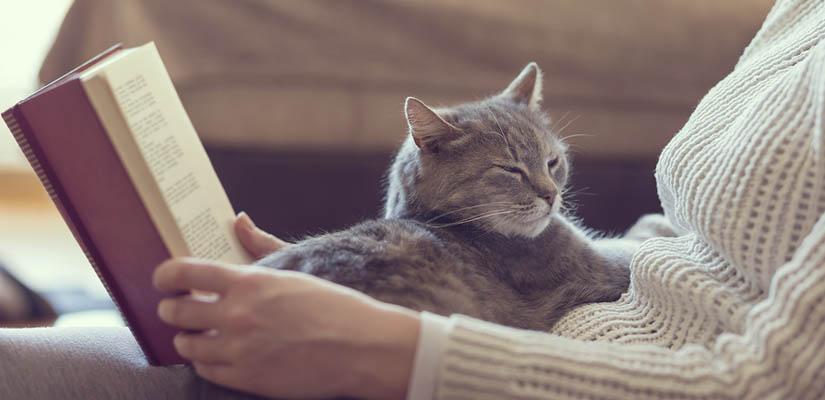 cosy warm cat on lap