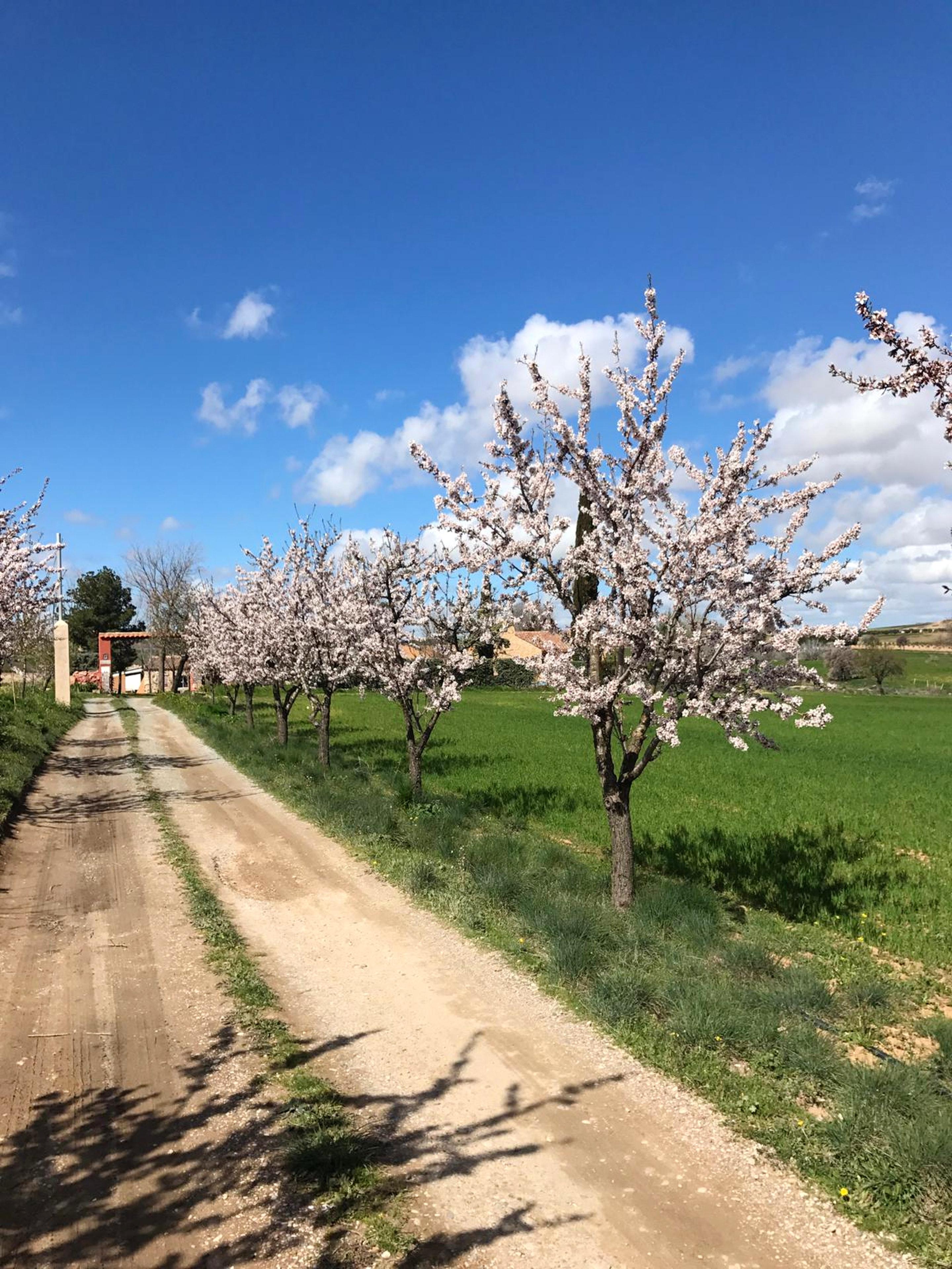 Ferienhaus Haus mit 7 Schlafzimmern in Burguillos de Toledo mit privatem Pool und eingezäuntem Garten (2299203), Burguillos de Toledo, Toledo, Kastilien-La Mancha, Spanien, Bild 31
