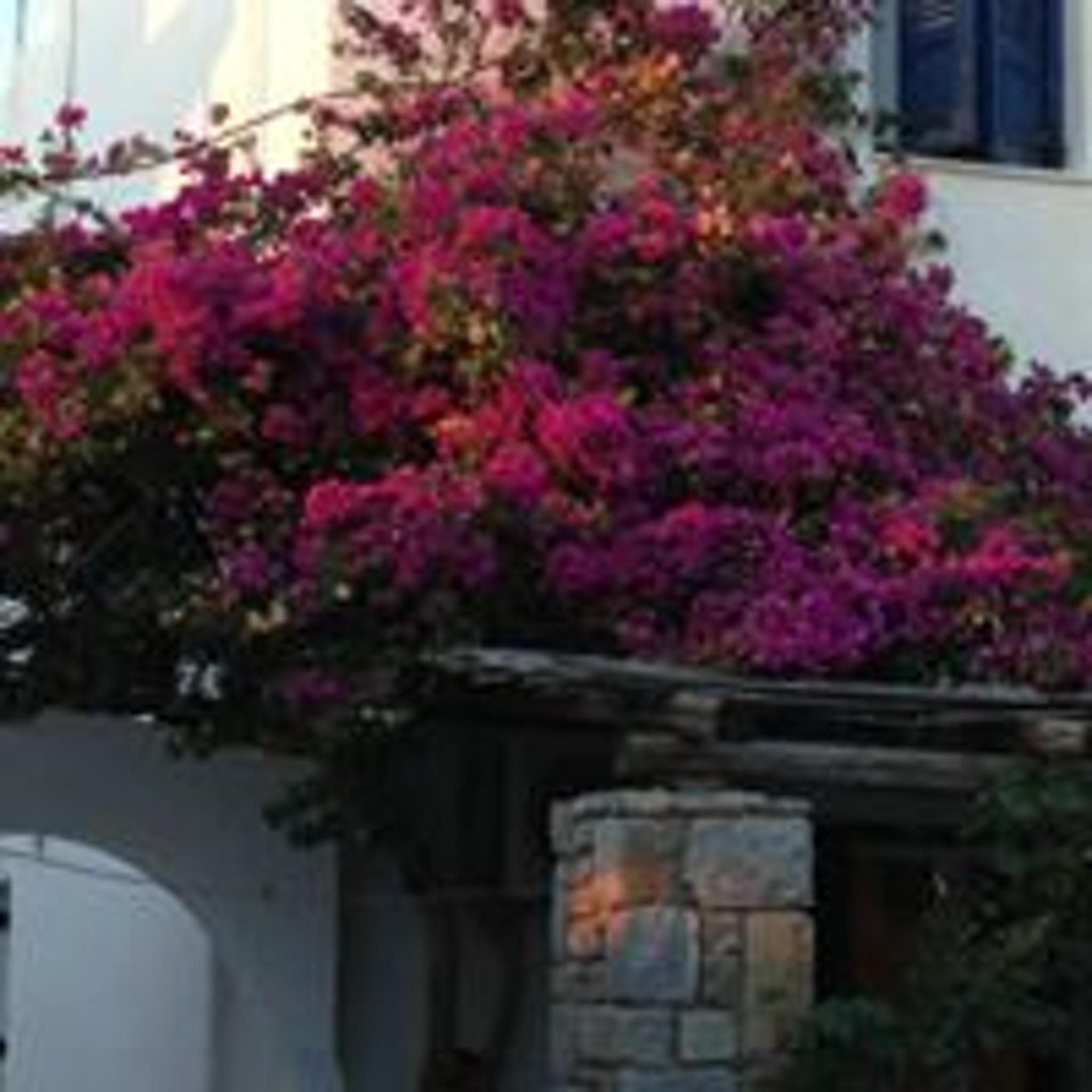 Holiday apartment Studio in Aliki mit herrlichem Meerblick, möblierter Terrasse und W-LAN (2201967), Aliki, Paros, Cyclades, Greece, picture 15