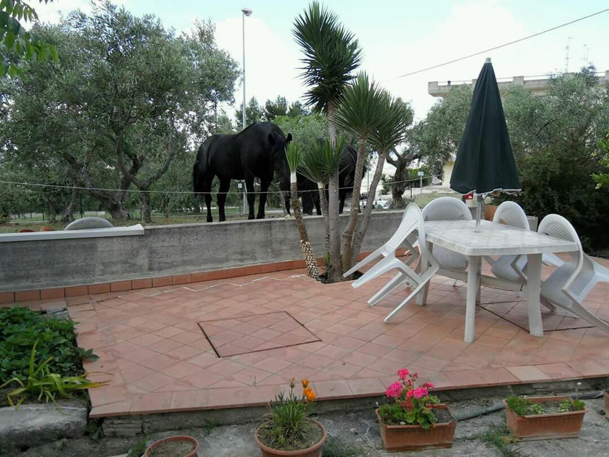 Ferienwohnung Wohnung mit einem Schlafzimmer in Matera mit eingezäuntem Garten und W-LAN - 45 km vom Str (2545714), Matera, Matera, Basilikata, Italien, Bild 13