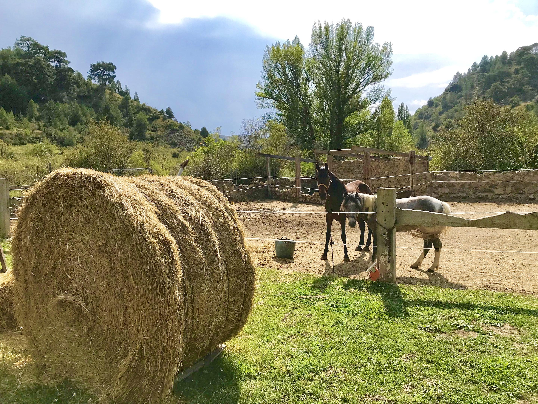 Maison de vacances Hütte mit 4 Schlafzimmern in Camarena de la Sierra mit toller Aussicht auf die Berge, priv (2474258), Camarena de la Sierra, Teruel, Aragon, Espagne, image 35
