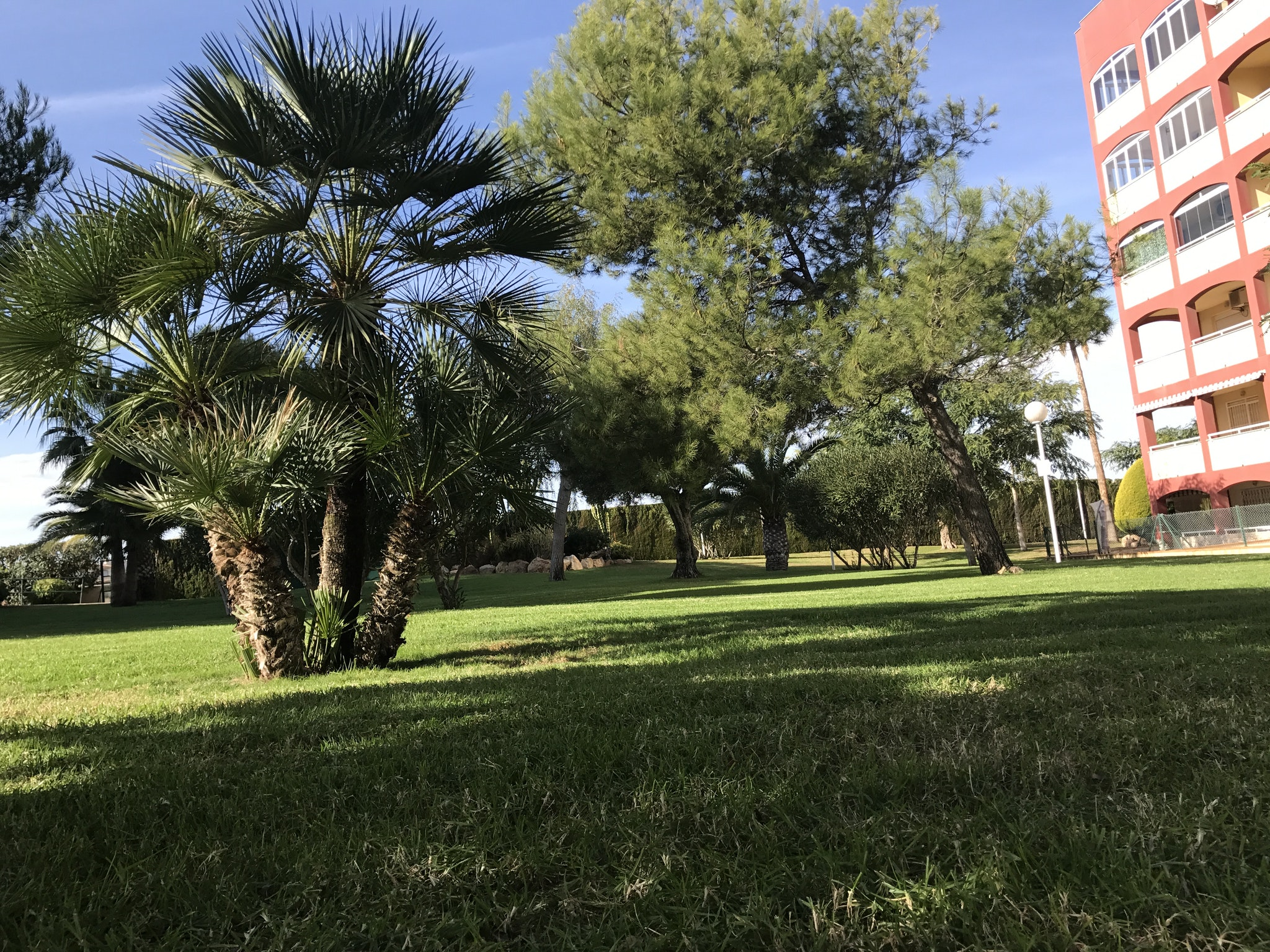 Ferienwohnung Wohnung mit 2 Schlafzimmern in Torrevieja mit Pool und möblierter Terrasse - 400 m vom Str (2342556), Torrevieja, Costa Blanca, Valencia, Spanien, Bild 21