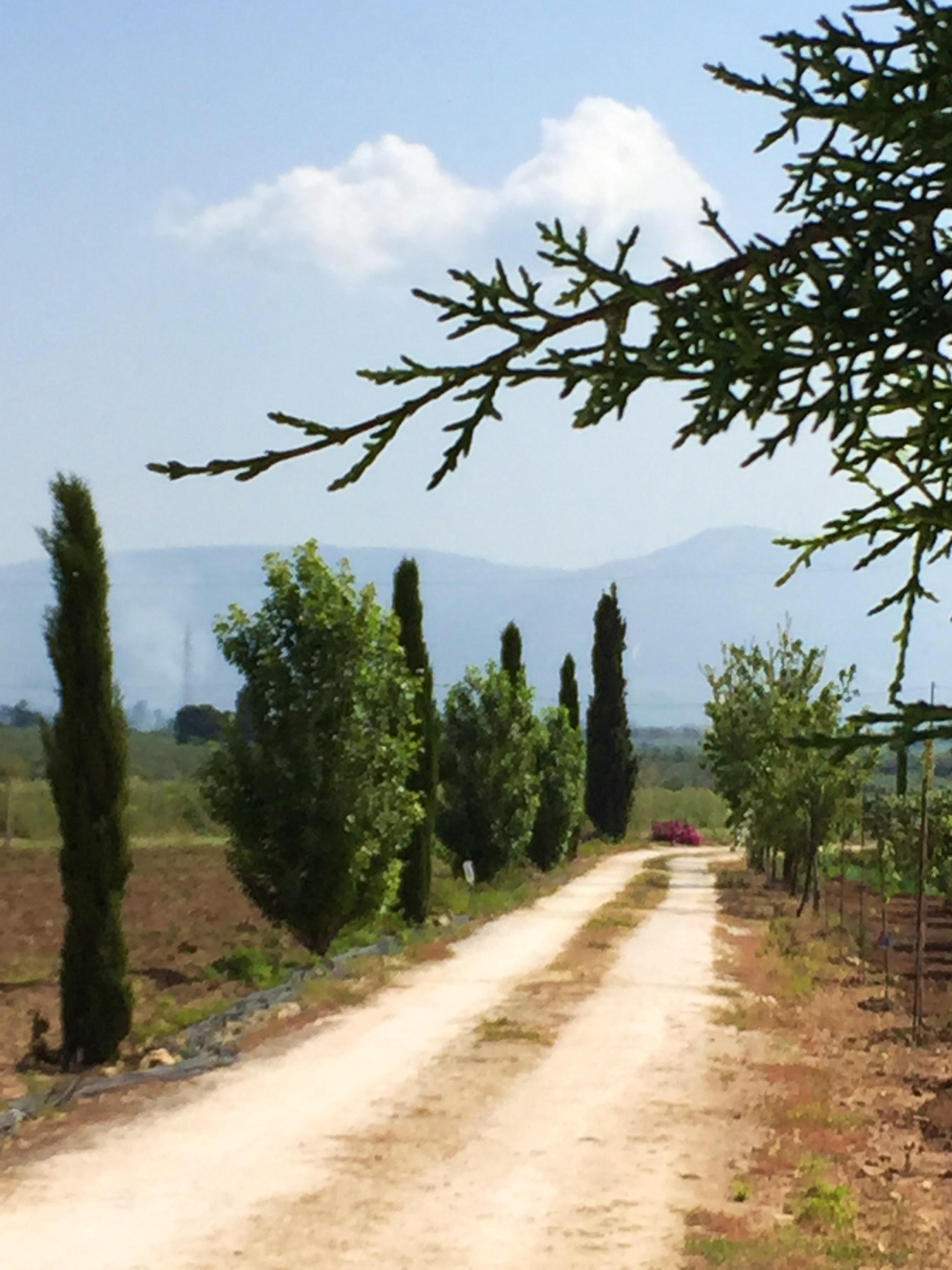 Ferienhaus Villa mit 2 Schlafzimmern in Sciacca mit herrlichem Meerblick, eingezäuntem Garten und W-L (2201303), Sciacca, Agrigento, Sizilien, Italien, Bild 13