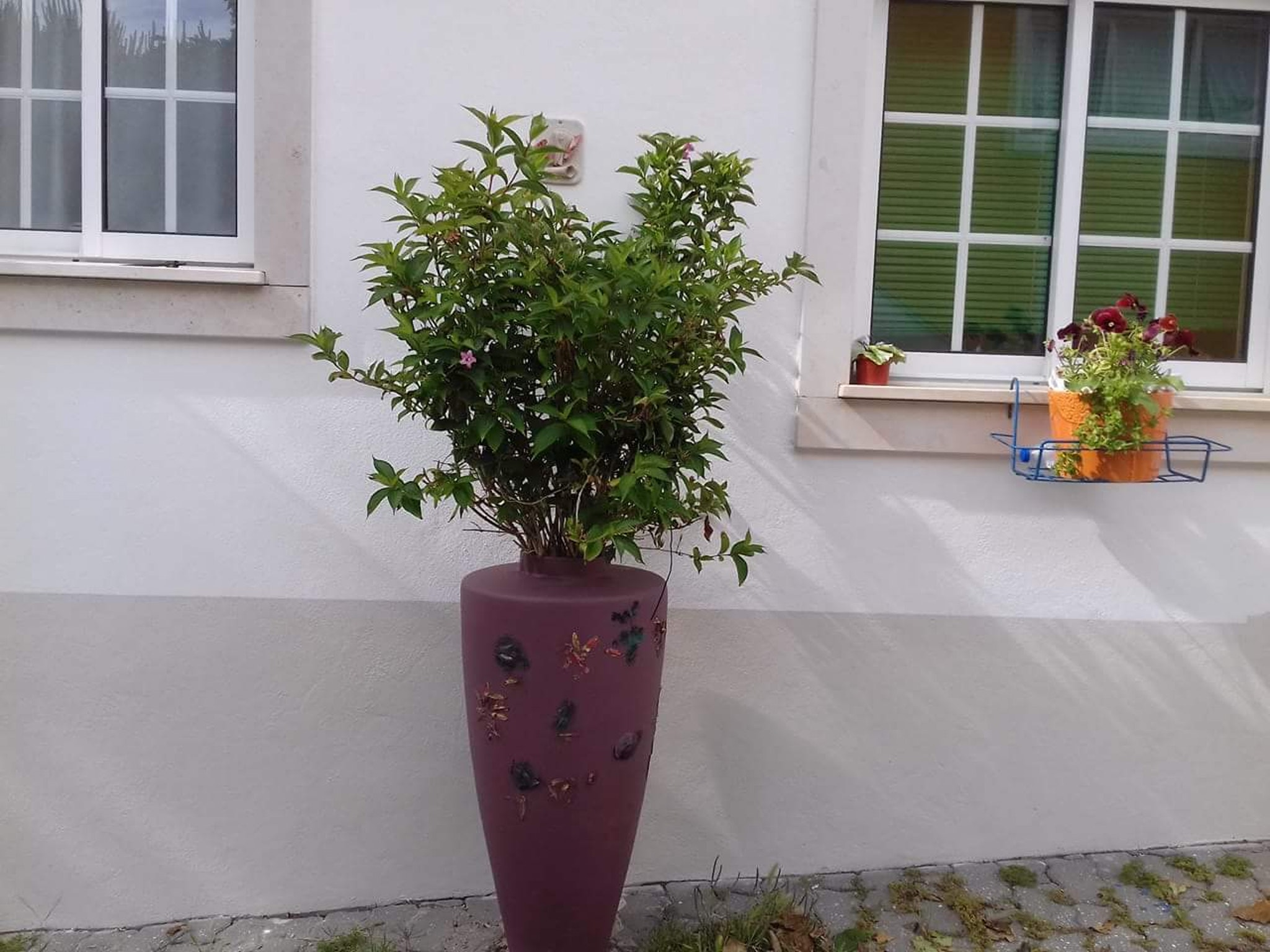 Holiday apartment Studio in Nazaré mit Pool, möbliertem Garten und W-LAN - 7 km vom Strand entfernt (2410449), Nazaré, Costa de Prata, Central-Portugal, Portugal, picture 25