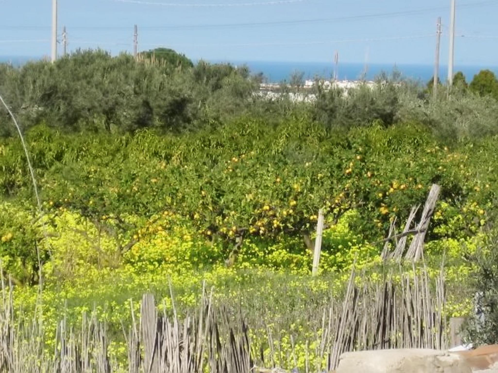 Holiday house Landhaus in Balestrate, Sizilien, mit Terrasse und Garten (2201079), Balestrate, Palermo, Sicily, Italy, picture 21
