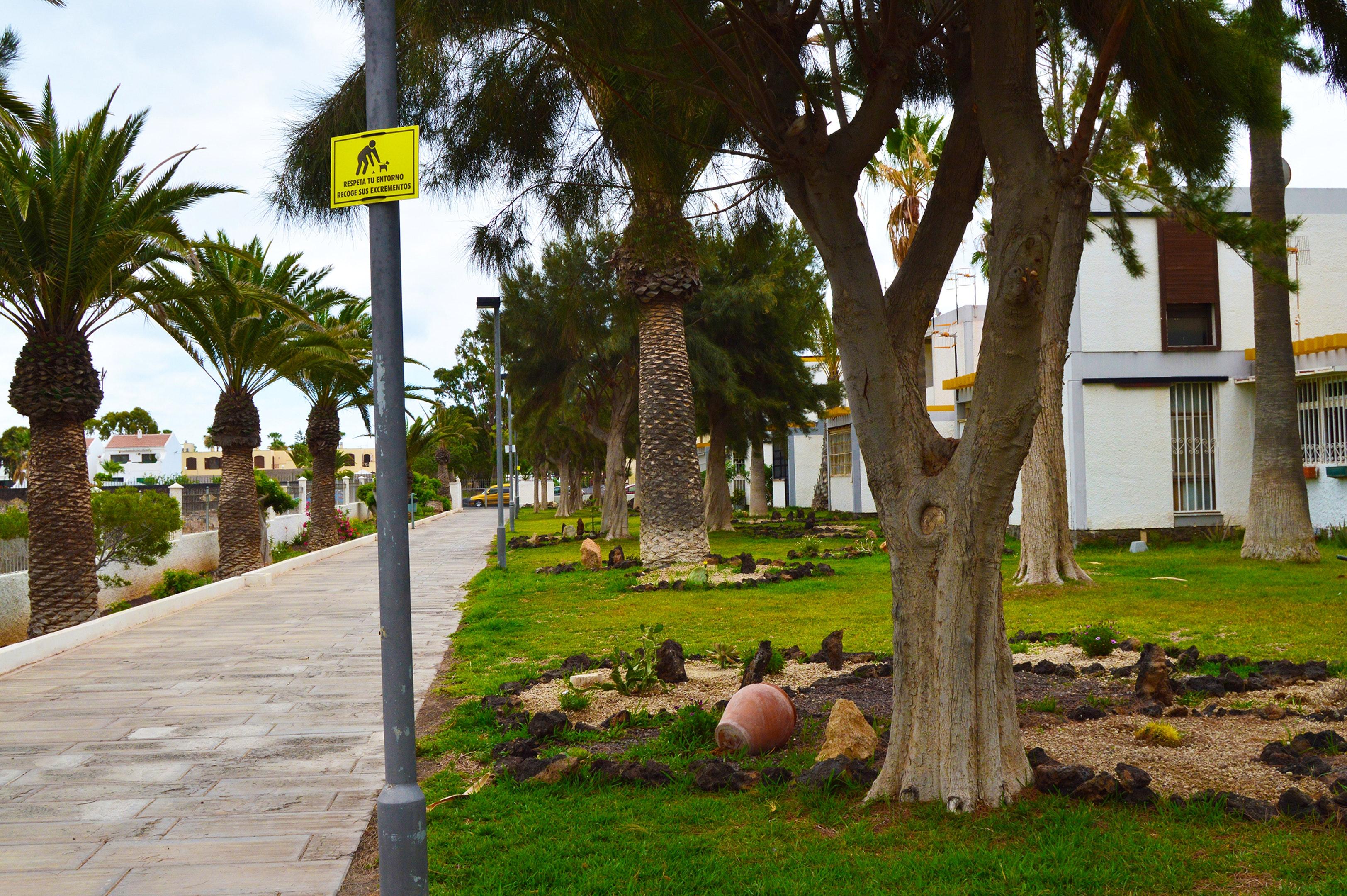Appartement de vacances Studio in Santa Cruz de Tenerife mit Pool und möbliertem Garten (2218191), San Miguel, Ténérife, Iles Canaries, Espagne, image 22