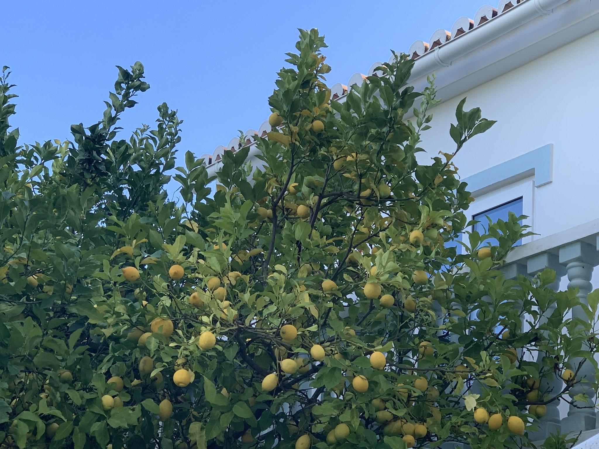Ferienwohnung Wohnung mit 2 Schlafzimmern in Carvoeiro mit Pool, eingezäuntem Garten und W-LAN - 500 m v (2622212), Carvoeiro, , Algarve, Portugal, Bild 18