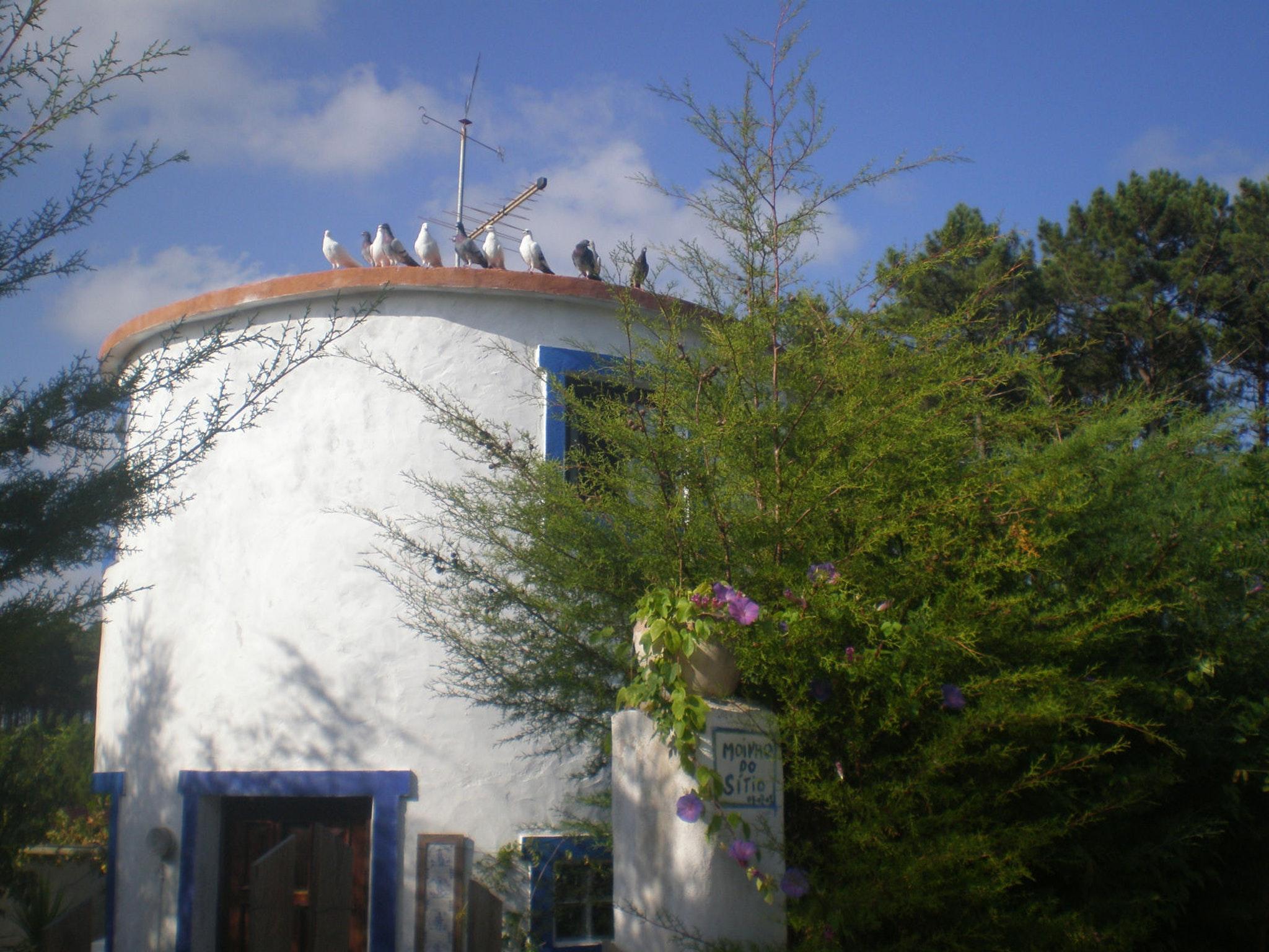 Holiday house Haus mit einem Schlafzimmer in Nazaré mit Pool, eingezäuntem Garten und W-LAN - 7 km vom S (2410448), Nazaré, Costa de Prata, Central-Portugal, Portugal, picture 8