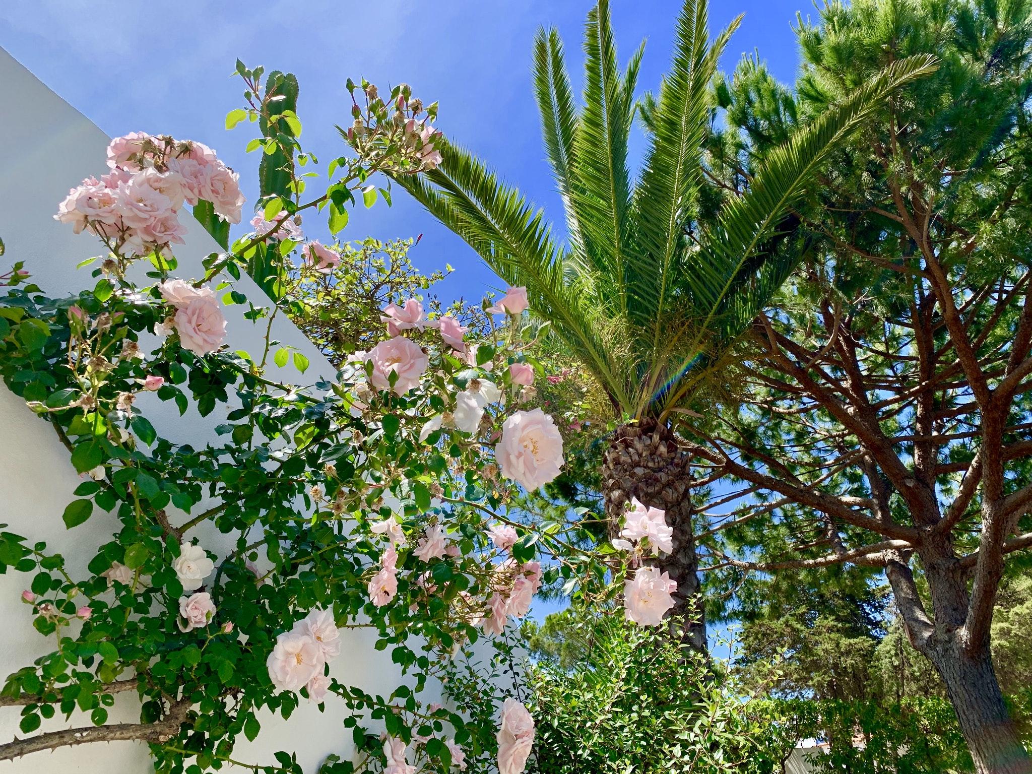 Ferienwohnung Wohnung mit 2 Schlafzimmern in Carvoeiro mit Pool, eingezäuntem Garten und W-LAN - 500 m v (2622212), Carvoeiro, , Algarve, Portugal, Bild 39