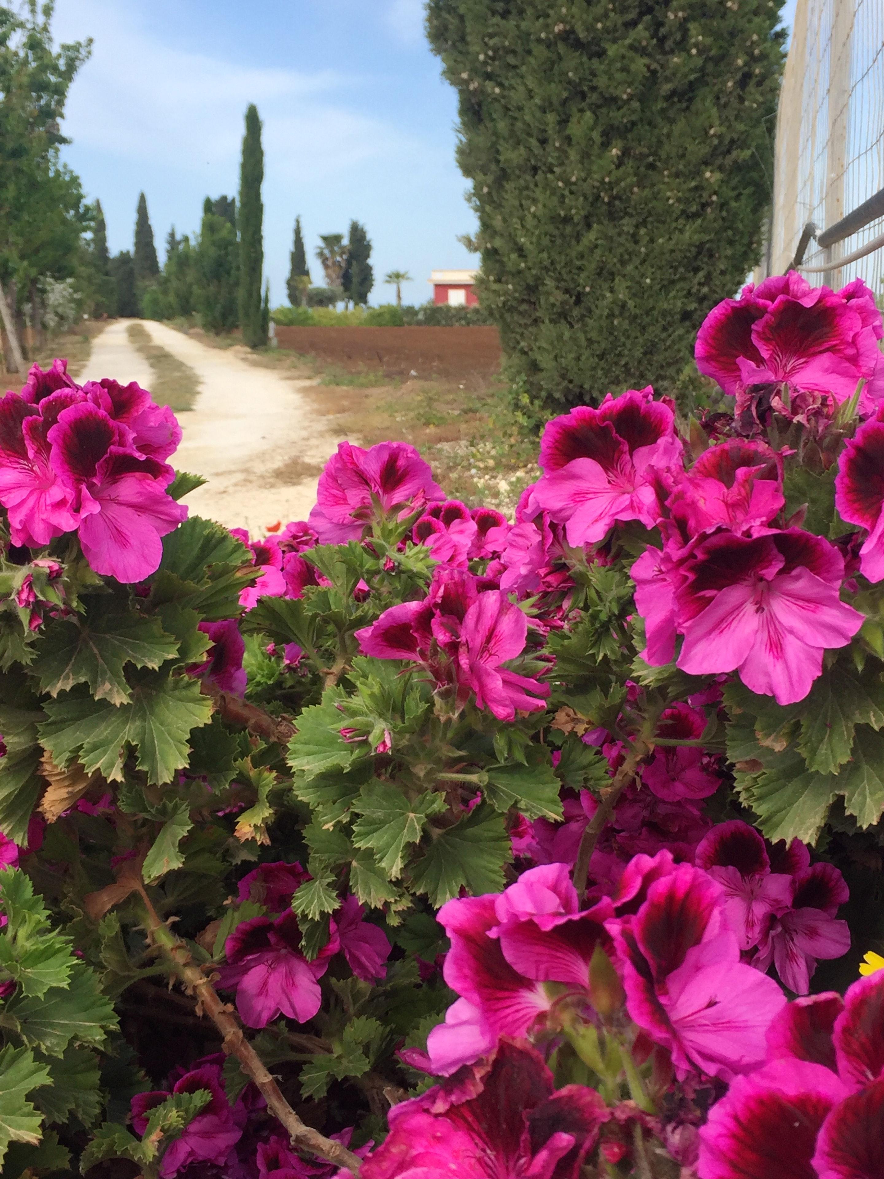 Ferienhaus Villa mit 2 Schlafzimmern in Sciacca mit herrlichem Meerblick, eingezäuntem Garten und W-L (2201303), Sciacca, Agrigento, Sizilien, Italien, Bild 12