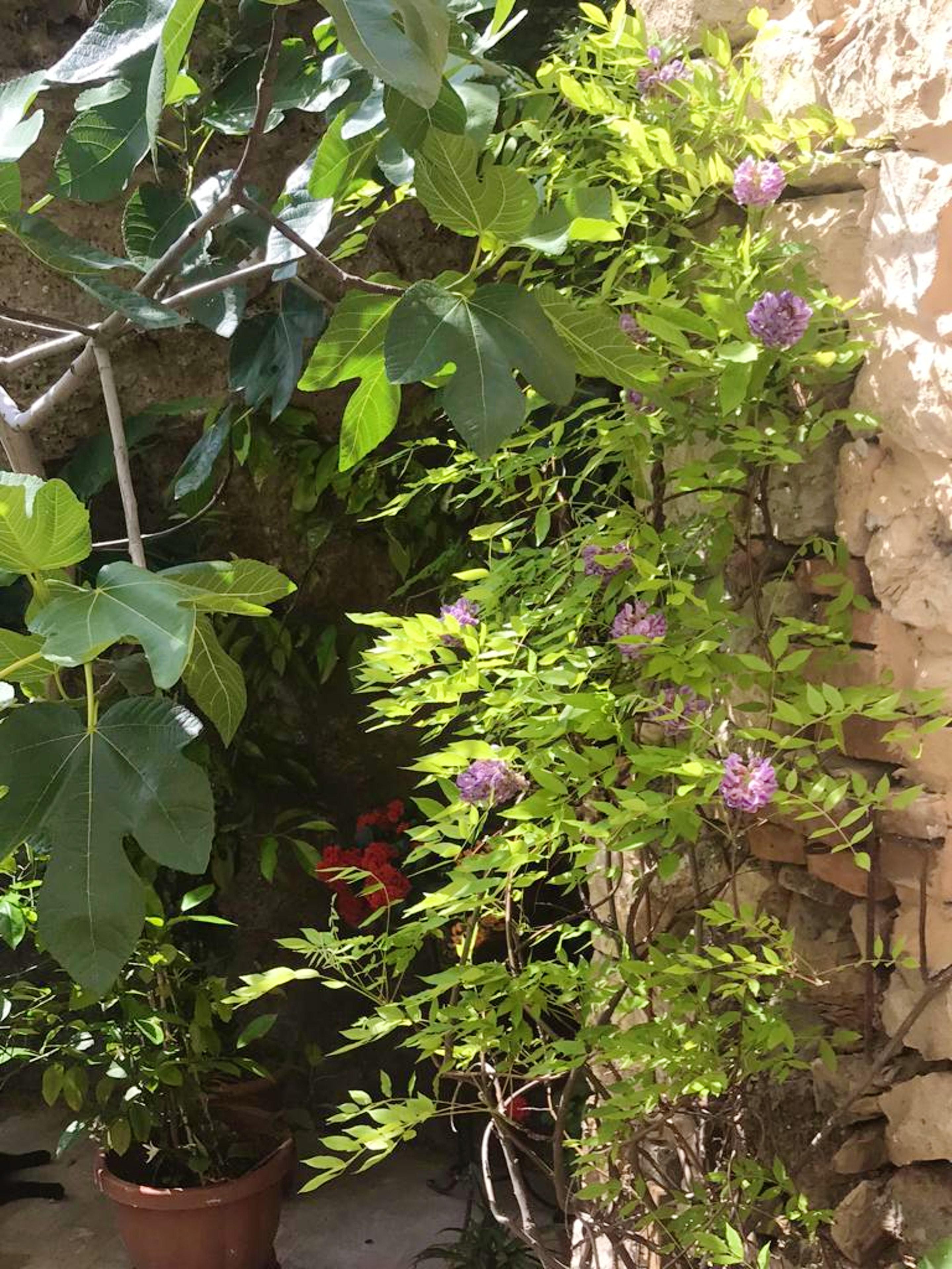 Ferienwohnung Wohnung mit einem Schlafzimmer in Montenero di Bisaccia mit möbliertem Balkon - 10 km vom  (2644862), Montenero di Bisaccia, Campobasso, Molise, Italien, Bild 15