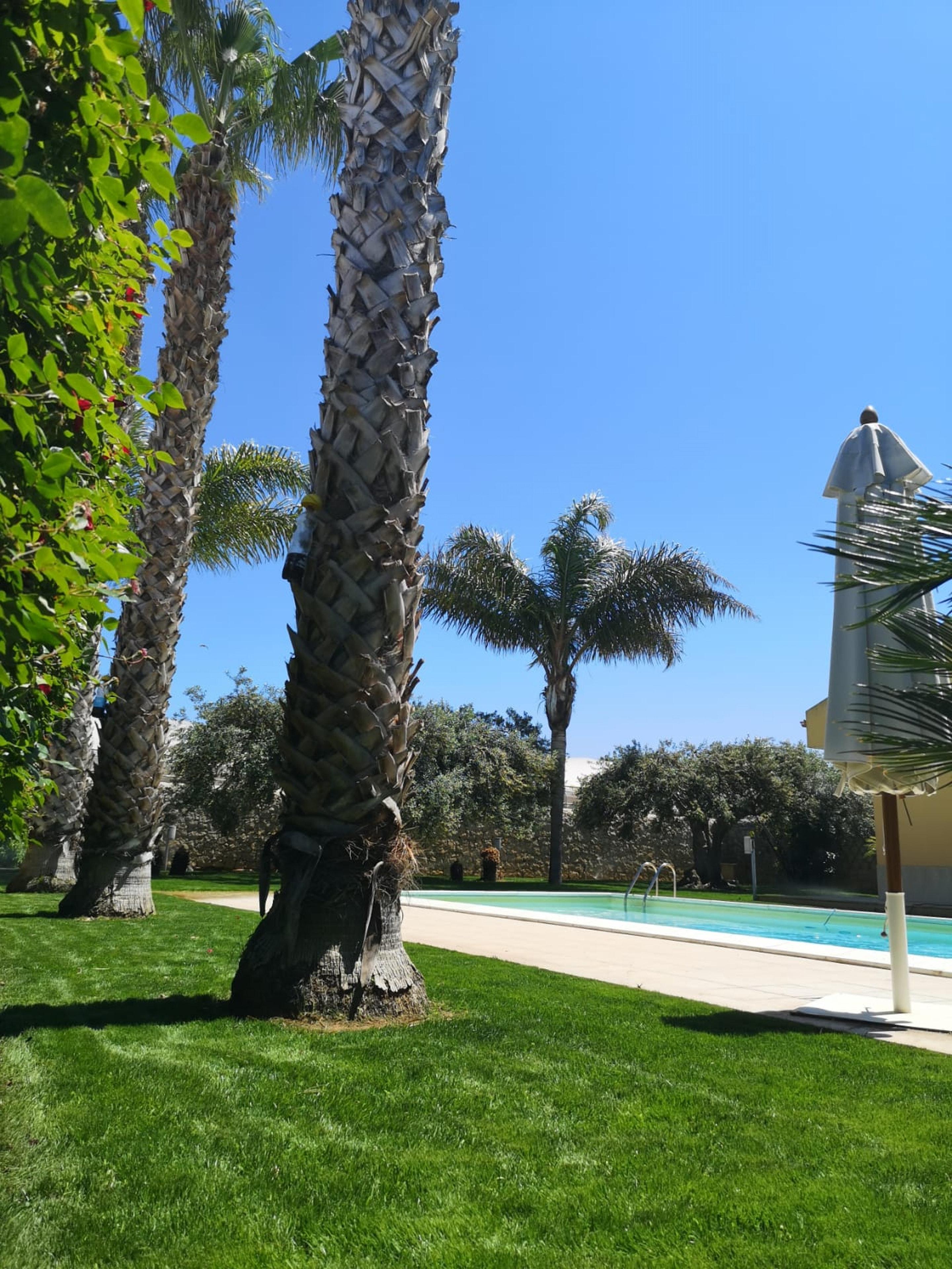 Maison de vacances Villa mit 4 Schlafzimmern in Scicli mit privatem Pool, eingezäuntem Garten und W-LAN - 300 (2617979), Scicli, Ragusa, Sicile, Italie, image 11