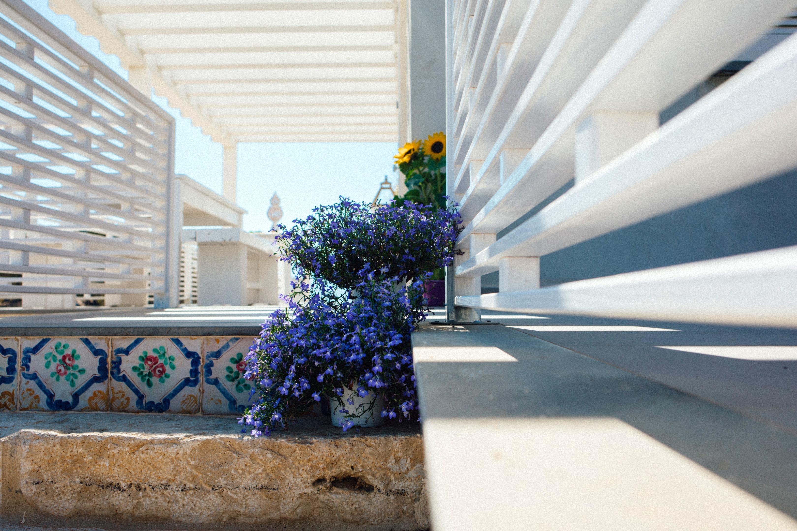 Holiday apartment Wohnung mit einem Schlafzimmer in Balestrate mit herrlichem Meerblick, eingezäuntem Garten (2635382), Balestrate, Palermo, Sicily, Italy, picture 20