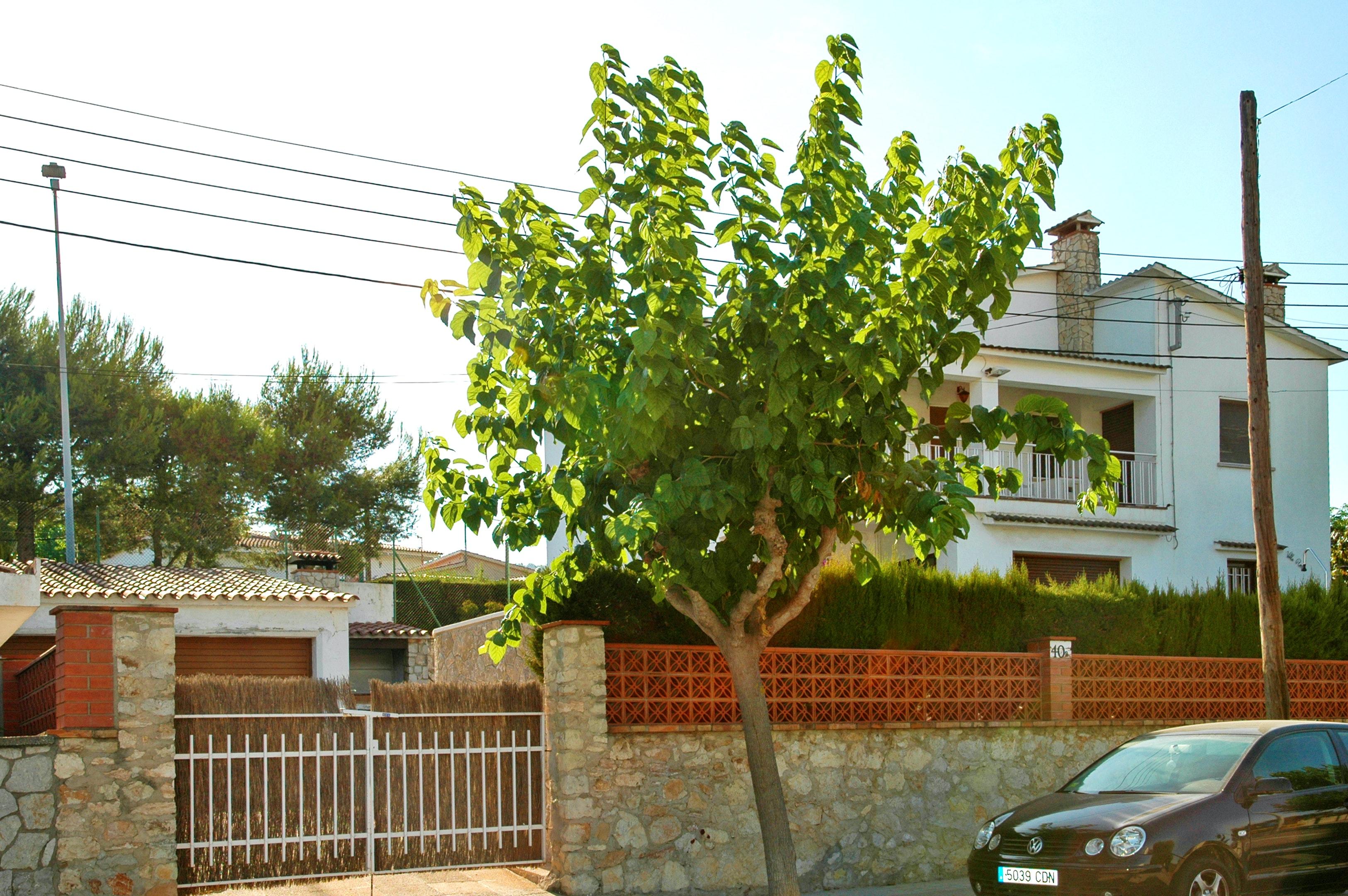 Ferienhaus Villa mit 6 Schlafzimmern in Canyelles mit toller Aussicht auf die Berge, privatem Pool, e (2339365), Canyelles, Costa del Garraf, Katalonien, Spanien, Bild 30