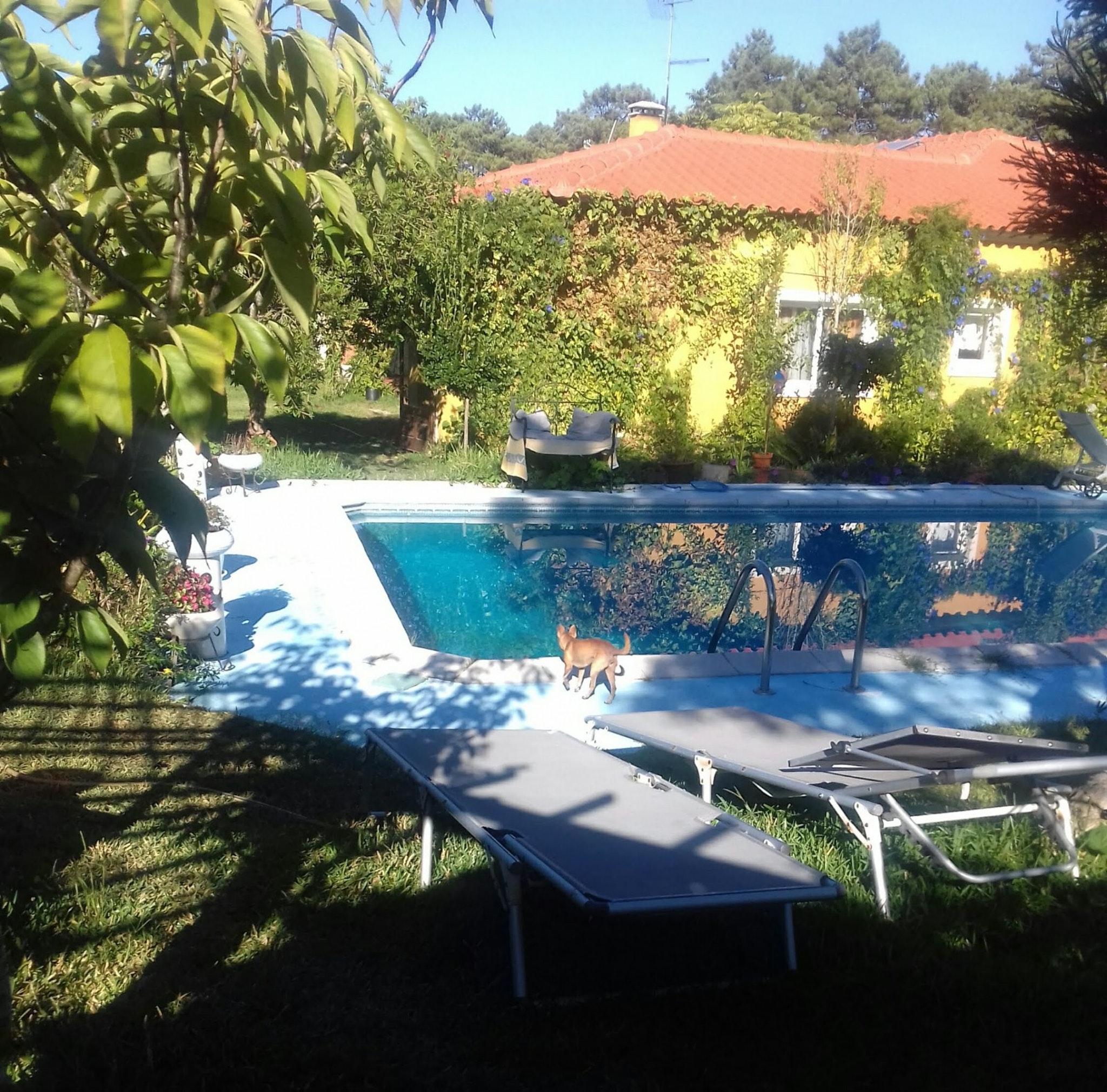 Holiday apartment Studio in Nazaré mit Pool, möbliertem Garten und W-LAN - 7 km vom Strand entfernt (2410449), Nazaré, Costa de Prata, Central-Portugal, Portugal, picture 38