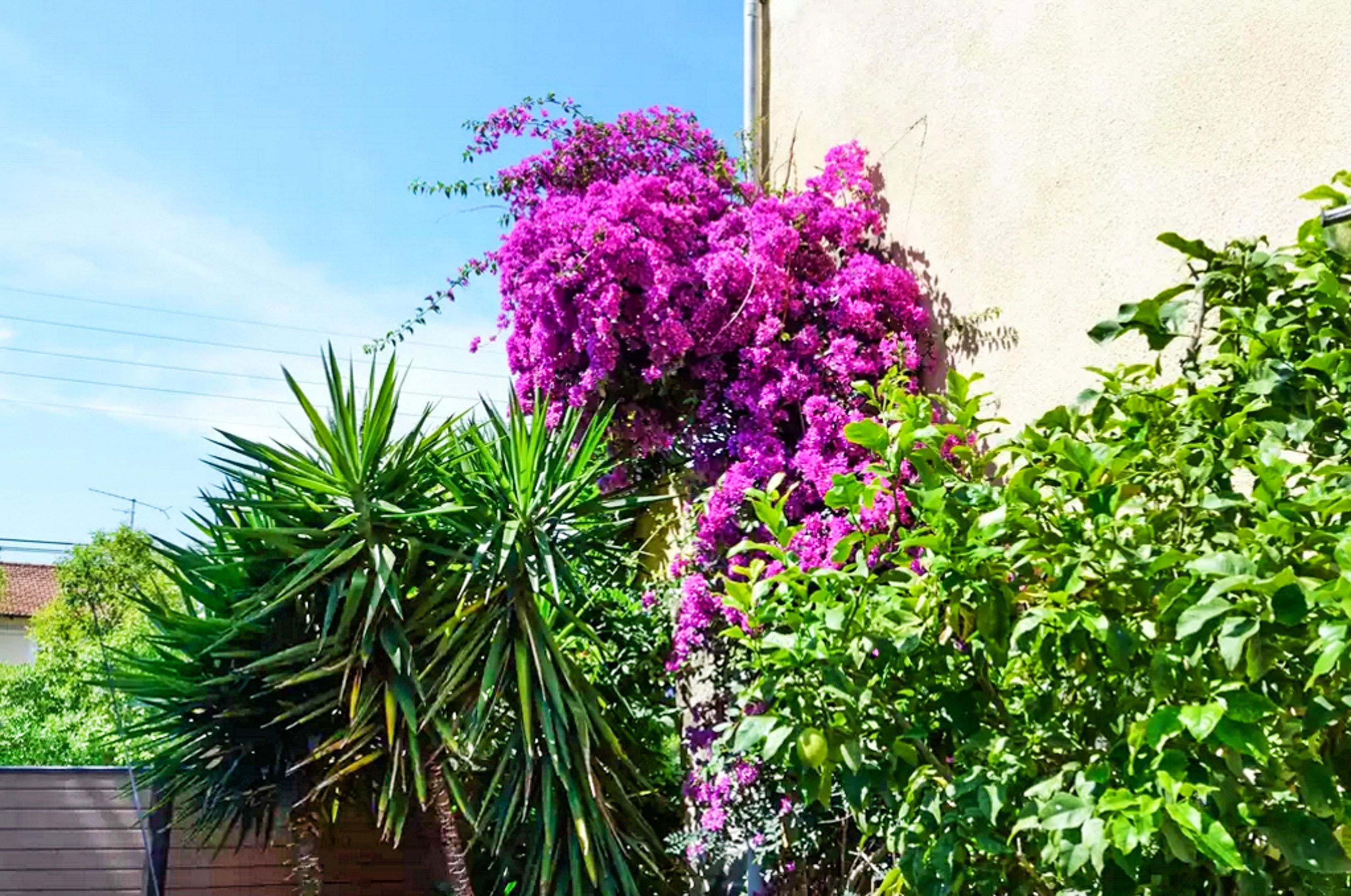 Holiday apartment Wohnung mit einem Schlafzimmer in Fréjus mit eingezäuntem Garten und W-LAN (2202409), Fréjus, Côte d'Azur, Provence - Alps - Côte d'Azur, France, picture 12