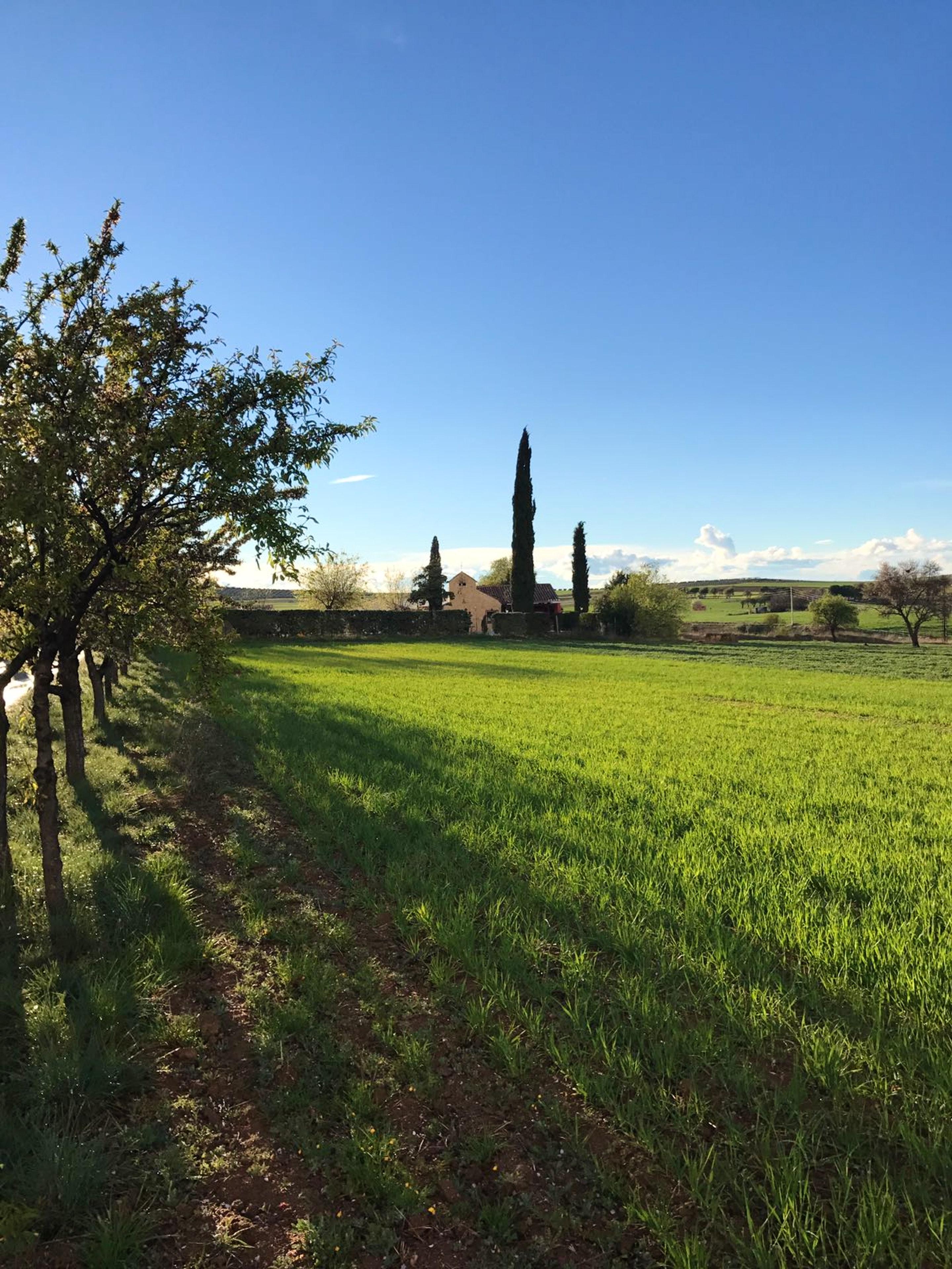 Ferienhaus Haus mit 7 Schlafzimmern in Burguillos de Toledo mit privatem Pool und eingezäuntem Garten (2299203), Burguillos de Toledo, Toledo, Kastilien-La Mancha, Spanien, Bild 43