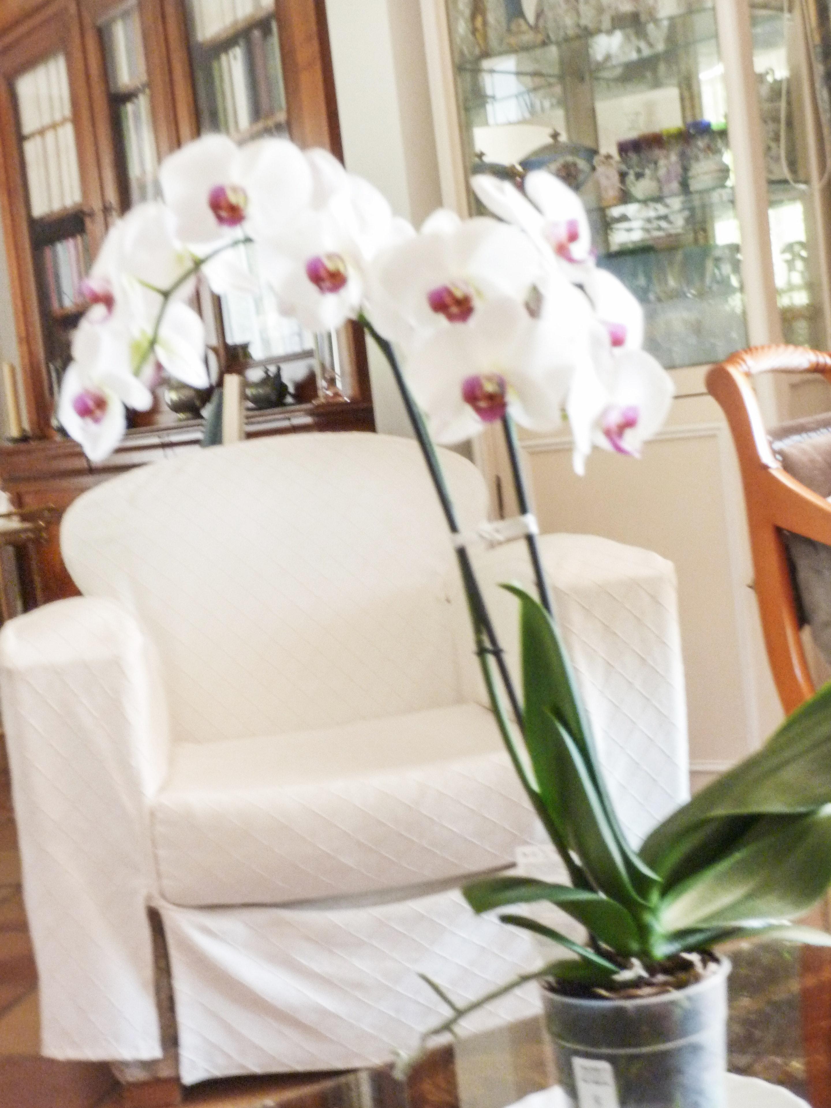 Ferienhaus Villa mit 5 Schlafzimmern in La Croix-Valmer mit privatem Pool, eingezäuntem Garten und W- (2201685), La Croix Valmer, Côte d'Azur, Provence - Alpen - Côte d'Azur, Frankreich, Bild 10