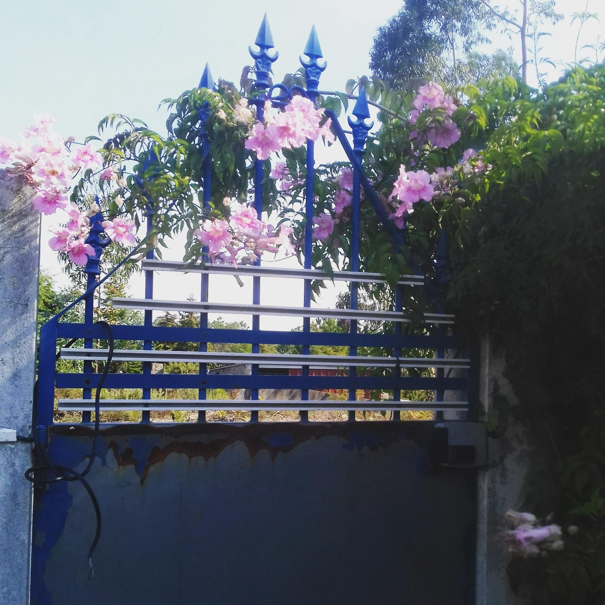 Holiday house Haus mit einem Schlafzimmer in Nazaré mit Pool, eingezäuntem Garten und W-LAN - 7 km vom S (2410448), Nazaré, Costa de Prata, Central-Portugal, Portugal, picture 12