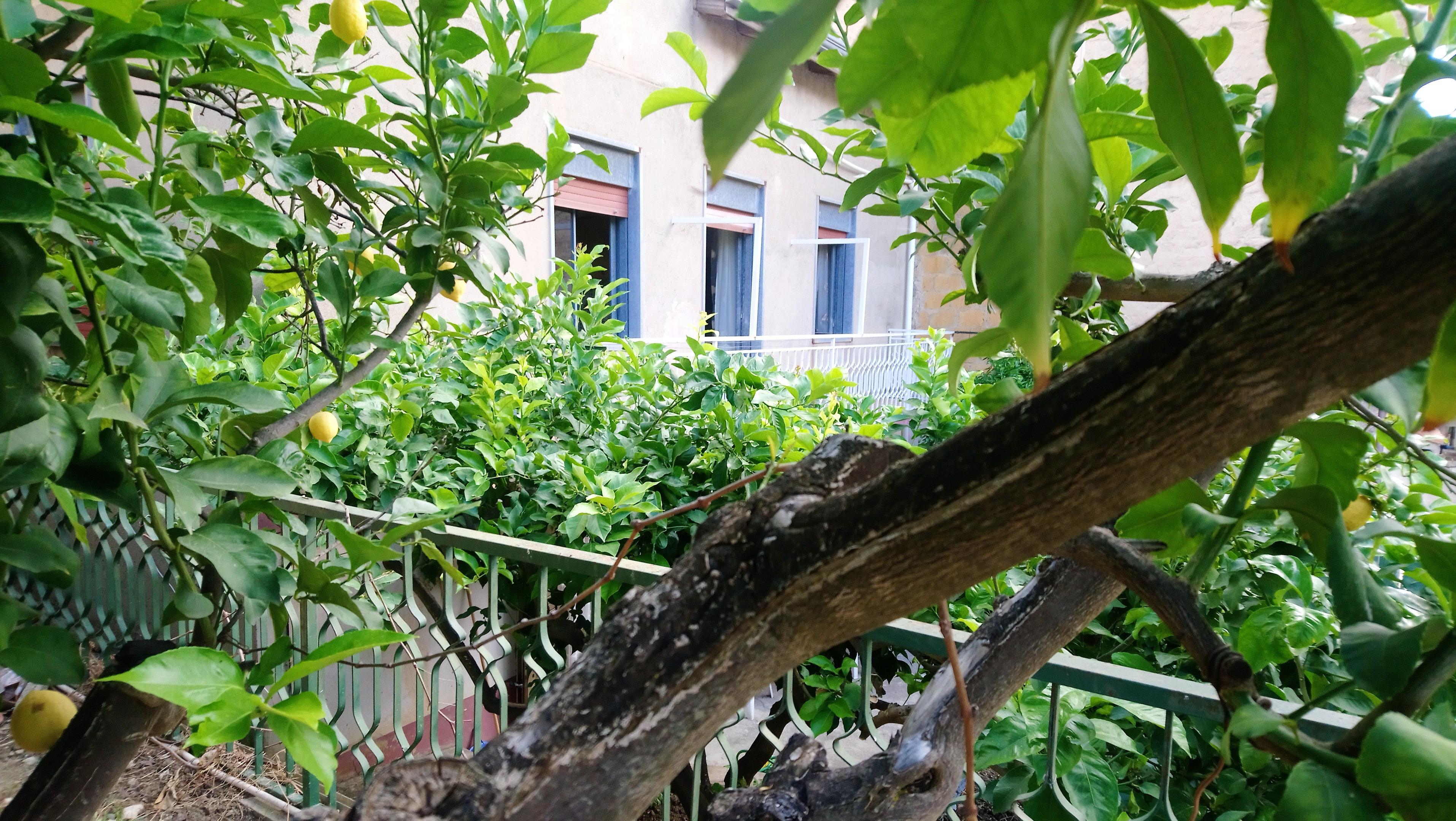Holiday apartment Wohnung mit 2 Schlafzimmern in Villalba mit toller Aussicht auf die Berge und eingezäuntem (2450668), Villalba, Caltanissetta, Sicily, Italy, picture 9