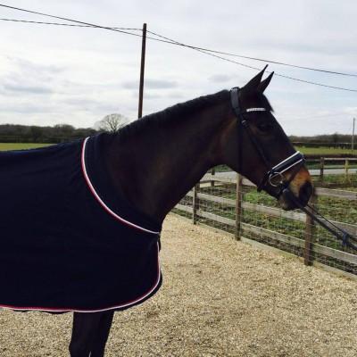 Photo - Truly Superb Amateurs Horse.