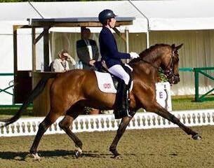 Photo - Truly outstanding 148cm 2002 gelding by Leuns Veld's Lord+Zeldenrust's Neptun.