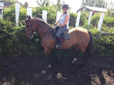Photo - 16.2h 7yo bay gelding by Steady Cruise out of a KWPN mare