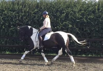 Photo - Lovely dressage mare